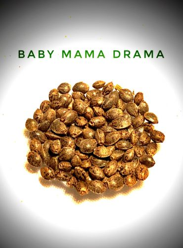 Baby Mama Drama Seed Labeled Pro