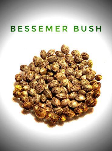 Bessemer Bush Labeled Seed