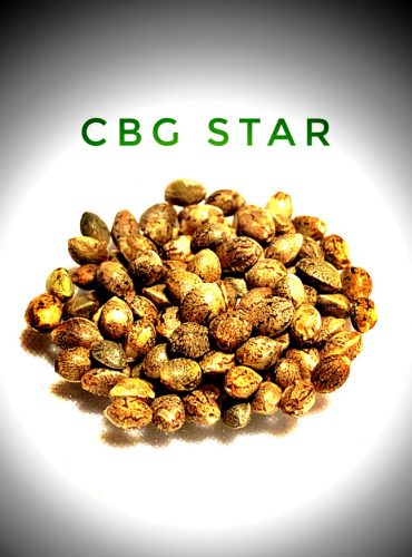 CBG Star Seed Labeled Pro