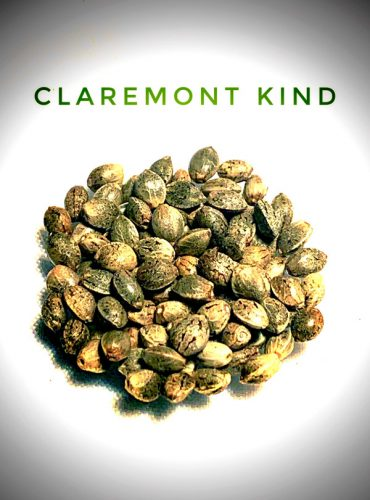 Claremont Kind Seed Labeled Pro