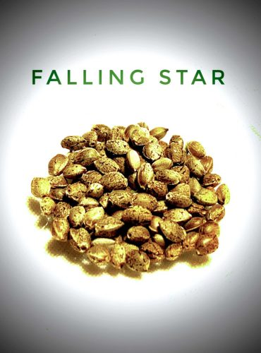 Falling Star Seed Labeled