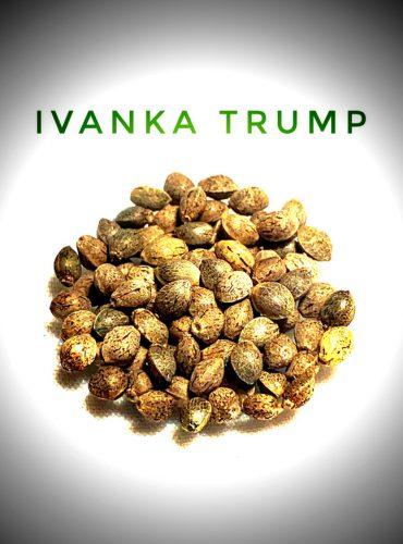Ivanka Trump Seed Labeled Pro