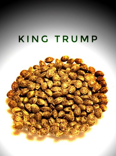 King Trump Seed Labeled Pro