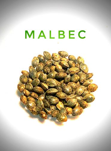 Malbec Seed Labeled Pro