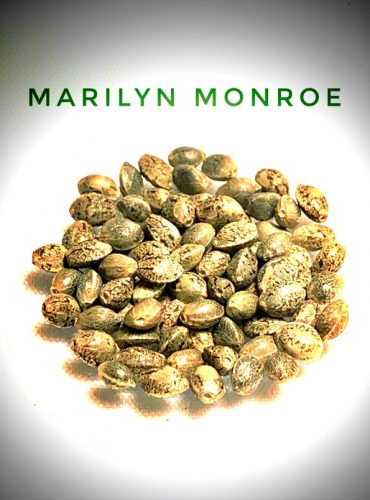 Marilyn Monroe Seed Labeled Pro