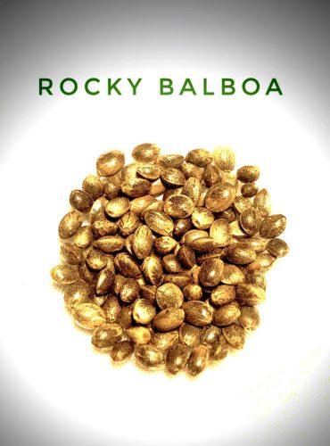 Rocky Balboa Seed Labeled Pro